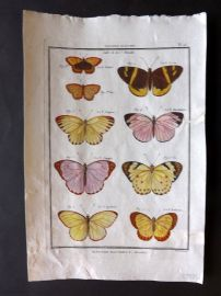 Diderot C1790 Antique Hand Col Print. Butterflies 16